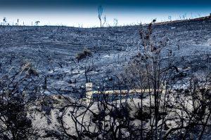 NEW ZEALAND PILOT DIES FIGHTING WILDFIRE – LODD