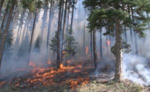 SHOTS FIRED STOPS MONT. WILDLAND FIREFIGHTING EFFORTS
