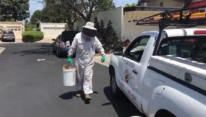 CA FIREFIGHTERS INJURED IN BEE ATTACK
